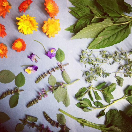 allandale herbs