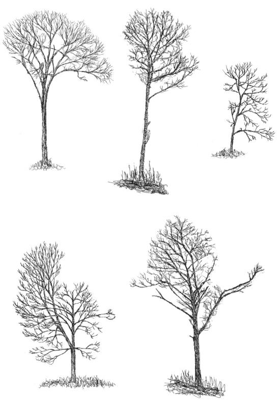 http://natureinstitute.org/pub/ic/ic14/trees.htm
