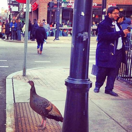 An amazing shot of a Boston bird by @Treasure_MA.