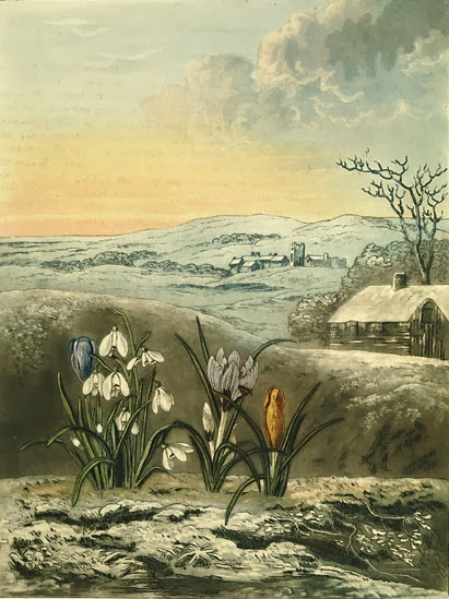 The Snowdrop and the Crocus by Abraham Pether. Visit link for many more gorgeous botanical illustrations.